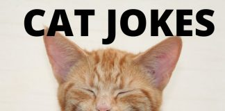Funny Cat Jokes - Cat Humor
