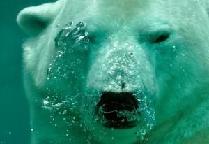 polar-bear-jokes-children
