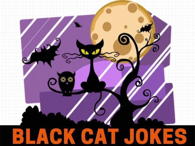 Black Cat Jokes