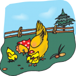Chicken - Hens with Chicks - Jokes about Chickens