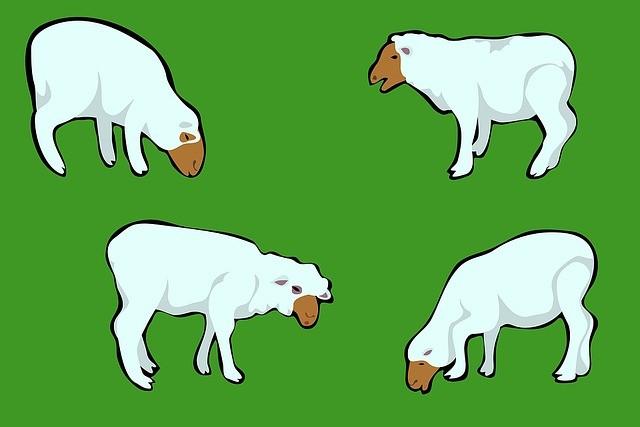 Sheep Jokes - Jokes About Sheep