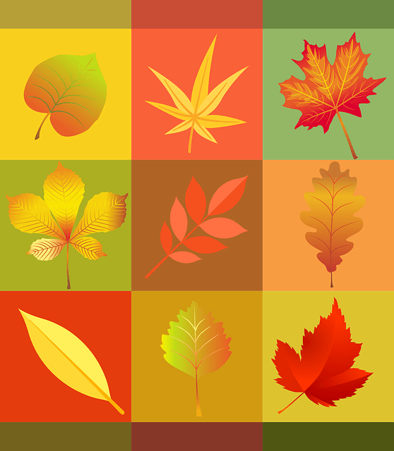 Leaf Jokes for Kids - Jokes about Leaves