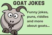 Goat Jokes - Clean Goat Jokes