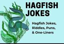 Hagfish Jokes - Slime Eel Jokes